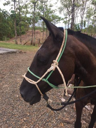 Sarapiqui, Costa Rica: My beautiful horse