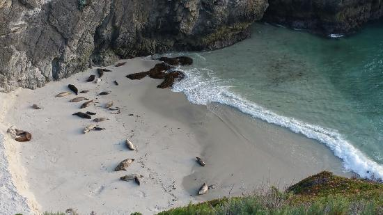 high surf at point lobos reserve picture of point lobos carmel rh tripadvisor com