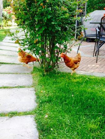 Bombyx Bed & Breakfast : Le nostre galline - Our hens