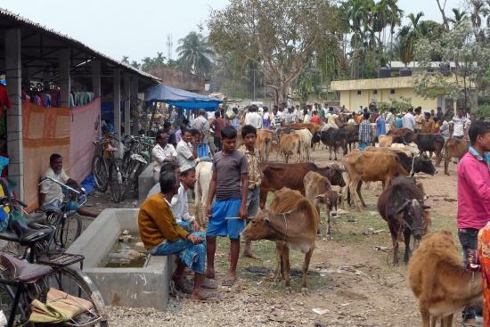 Wild Mahseer: Local Market