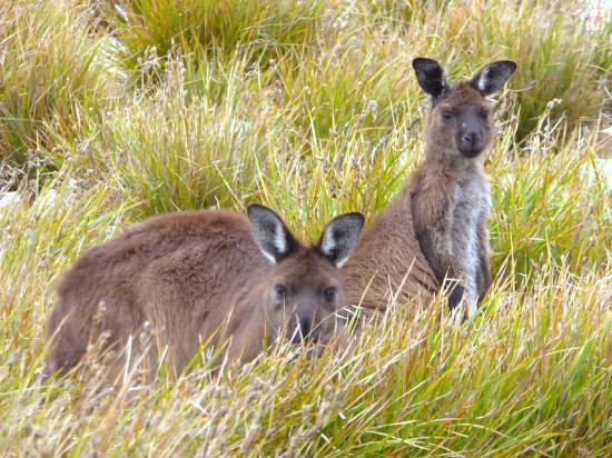 Kingscote, Australia: mum and joy :)
