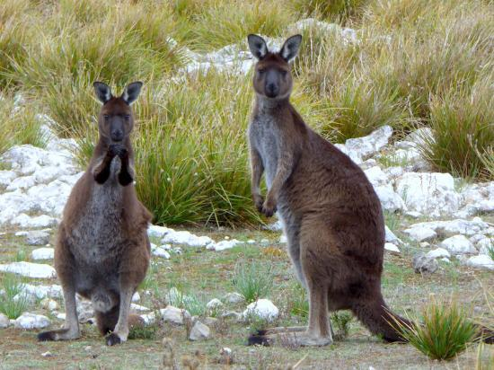 Kingscote, Australia: Mum and joy againg