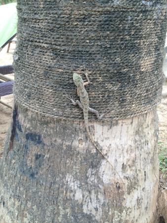 Kahandamodara, Σρι Λάνκα: little friend