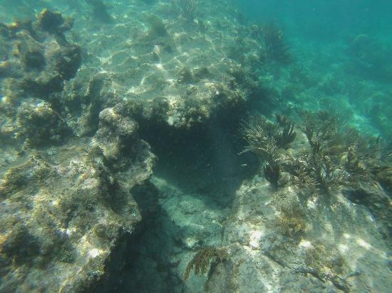Симпсон-Бей, Сен-Мартен – Синт-Мартен: Spotted a barracuda under the rocks