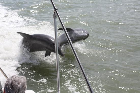 Southwest Florida Dolphin & Nature Cruises, LLC.