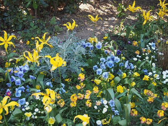 Parc Olbius Riquier : Une Plate Bande Fleurie