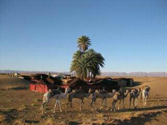 Auberge Camping Oasis El Mharech