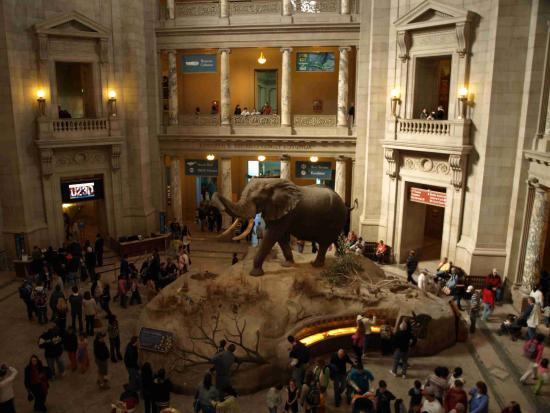Smithsonian Museum Natural History Parking