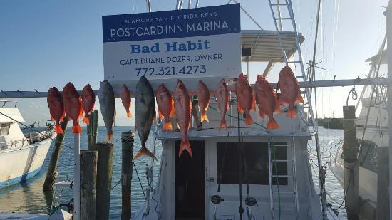BadHabit Sportfishing