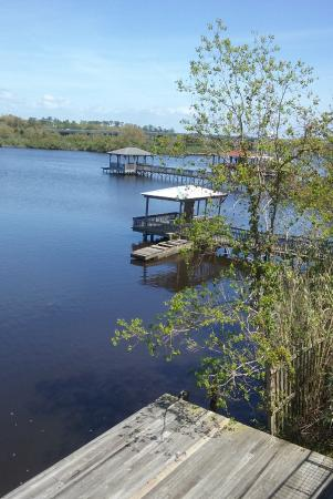 Blow-Fly Inn: The bayou from the restaurant deck
