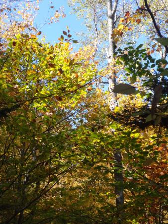 White Mountain National Forest: Trees in their glory on our hikes