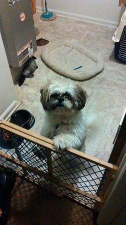 Farmington, NY: My doggie reggie