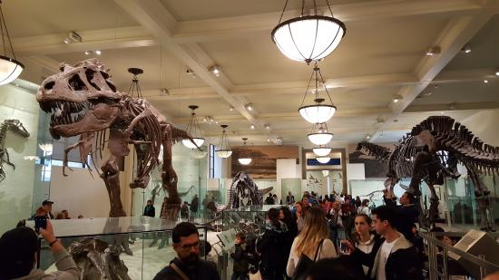 American Museum of Natural History  The dinosaur rooms will leave you  wide eyed. The dinosaur rooms will leave you wide eyed    Picture of American
