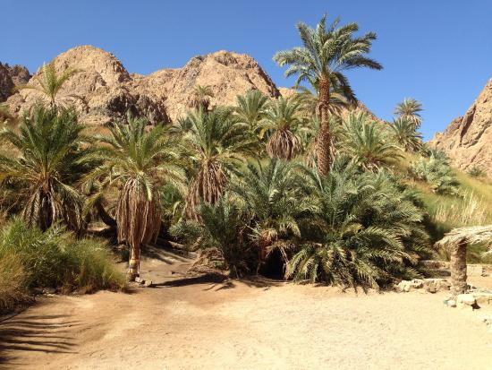 Dahab Safari Day Tours: وادى جنى is a very breathtaking place found in Dahab full of palm trees and rainfall water