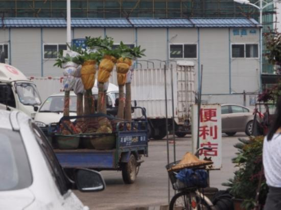 Longhai, Çin: truck