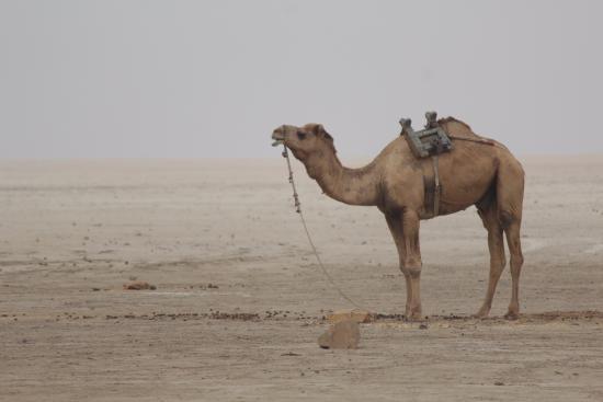Bootman Picture Of White Desert Bhuj TripAdvisor - Bootman us map