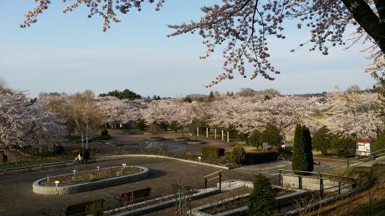 Hachinohe Park