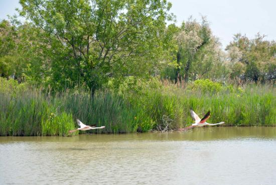 Tours in Provence - Day Tours : Flamands Roses