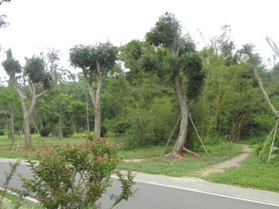 Huguangyan Scenic Area: Photo of some of the diverse flora inside the park.