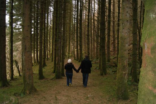 Argyll and Bute, UK: A tranquil forest walk