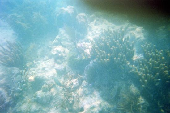 Hall's Diving Center: EO's at the Ivory Wreck? Or just stuff on the bottom?