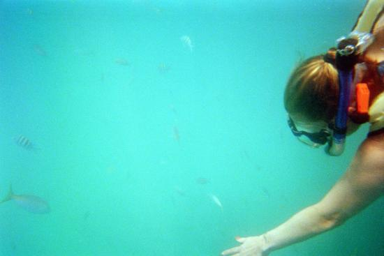 Hall's Diving Center: Petting some fish.