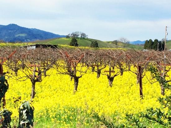 Savor Napa Valley Wine Tours