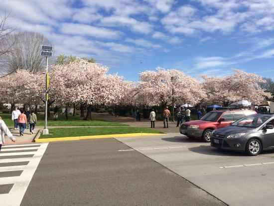 Oregon State Capitol: photo1.jpg