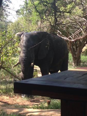 Manyeleti Game Reserve, Sudáfrica: photo1.jpg