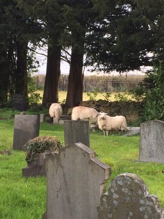 ‪‪Llanwern‬, UK: Churchyard nearby‬