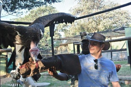Hoedspruit, Νότια Αφρική: Vultures