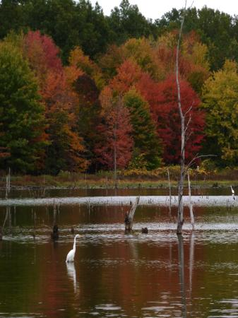 Sandy Ridge Reservation: From a visit October 2015