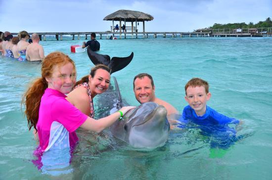Roatan Institute for Marine Sciences - Anthony's Key Resort: Dolphin Encounter at Anthony's Key