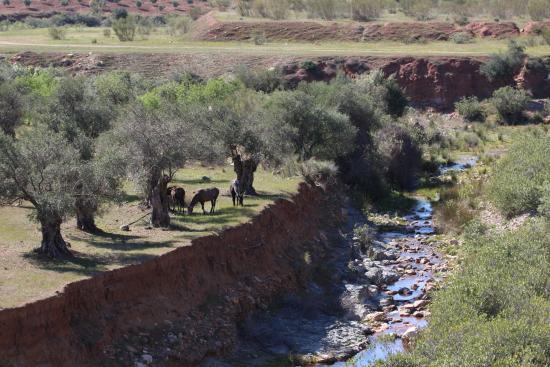 Almogia, Spanien: Horses