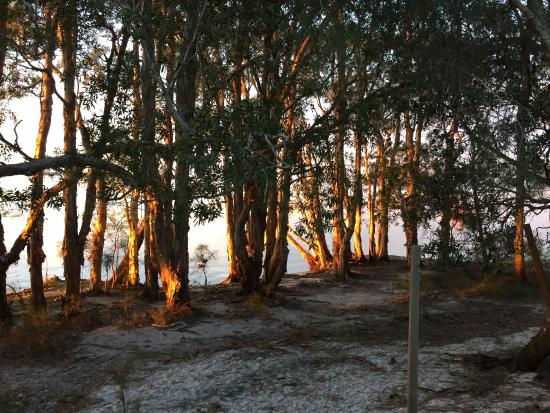 Myall Lakes National Park, Australia: Dawn view from the villa