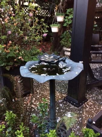 Barclay House Bed and Breakfast: Backyard birdbath
