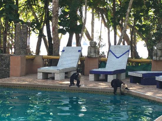 Bilde fra Hotel Verde Mar
