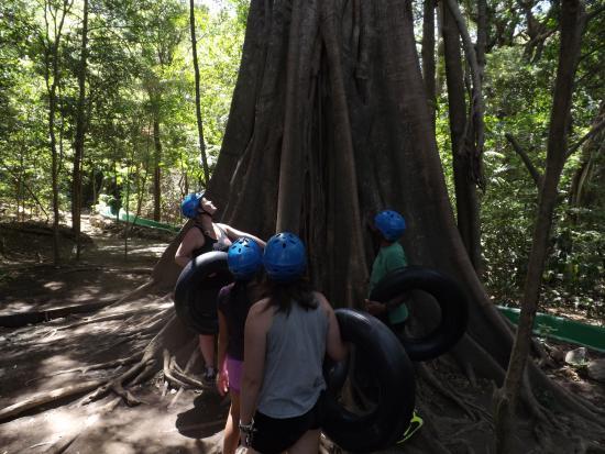 Rincon de La Vieja, Costa Rica: huge tree