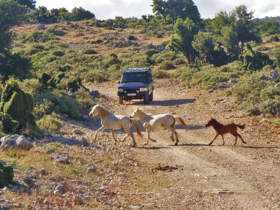 Kefalonia, Griekenland: On a 4x4 safari!