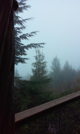 Soule Creek Lodge: From cabin deck