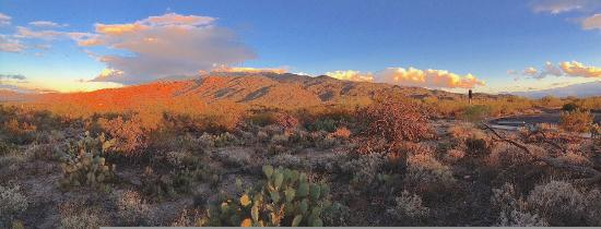 View of Rincon Mountains from Saguaro National Park Picture of
