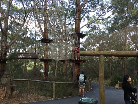 Arthurs Seat, Australia: children's tree surfing & high ropes course