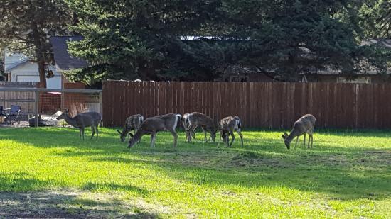 Sisters, Орегон: Neighborhood deer!