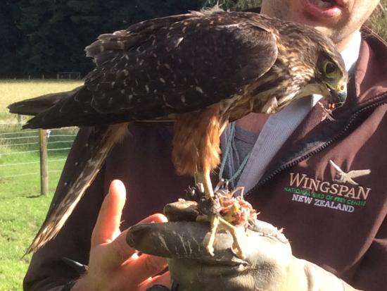 Ngongotaha, Yeni Zelanda: One of the birds in the display,