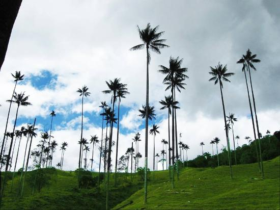 Salamina, Colombia: a 1 kilometro de San Felix se encuentra esta bonita reserva
