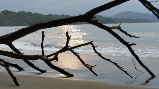 Playa Bluff Lodge : hermosa la playa