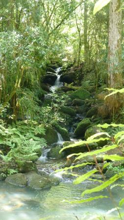 Whangarei, New Zealand: An adjoining stream along the way