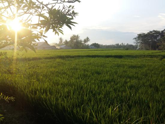 Mandala Desa: Sunset is the most peaceful and beautiful time of day