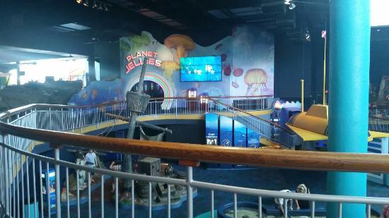 Enjoying the Sea World - Picture of Ripley's Aquarium of ...