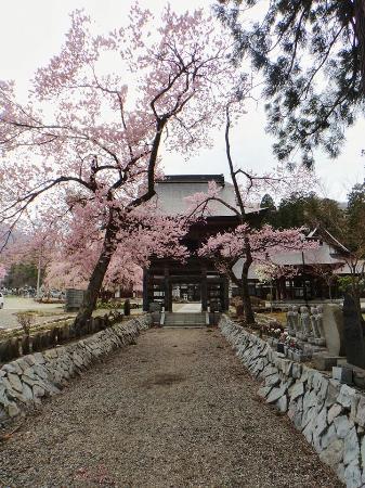Snowbird Pension: Local cherry blossoms